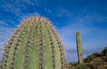 Cactus Wellness Tips In Phoenix Arizona The Cactus Doctor